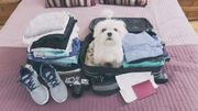 Les 4 conseils pour voyager avec son animal