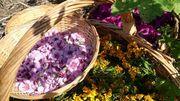 Les Saveurs de chez nous : des tisanes récoltées du côté de Xhoris