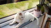 France: une femme retrouve son chat 8 ans après sa disparition
