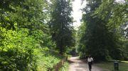 La hêtraie contribue au cadre majestueux du parc Duden