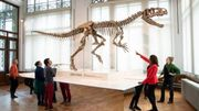 Le nouveau prédateur du Jurassique au Musée des Sciences Naturelles
