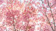 Le printemps, source inépuisable d'inspiration pour les compositeurs et les poètes
