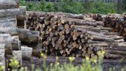Du bois wallon acheté par la Chine et revendu en Belgique: la filière bois s'inquiète pour ses emplois