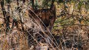 La situation des guépards est malheureusement symptomatique d'un mal-être planétaire et d'une menace grandissante sur les animaux sauvages qui nous fascinent.