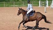 Focus sur l'équitation avec l'Adeps... et les dernières places de stages disponibles!