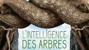 """""""L'intelligence des arbres"""", un documentaire pour regarder la forêt autrement"""
