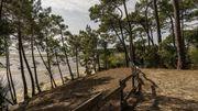 Voyage en France : les forêts du Bassin d'Arcachon, des milieux exceptionnels entre lagune et océan