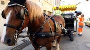 """Le cheval de trait en ville, le coup de gueule de Marianne Virlée dans """"C'est pas fini"""""""