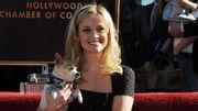 """""""La revanche d'une blonde 3"""" : Reese Witherspoon de retour dans un troisième volet ?"""