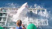 Un plongeur a eu la frayeur de sa vie, et un requin aussi