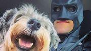 Un sympathique Batman sillonne les Etats-Unis pour sauver les animaux abandonnés