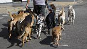 Dimanche, la Société Protectrice des Animaux organise une balade canine à Ronquières