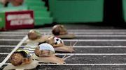 Journée de l'escargot et du coquillage à Lanaye