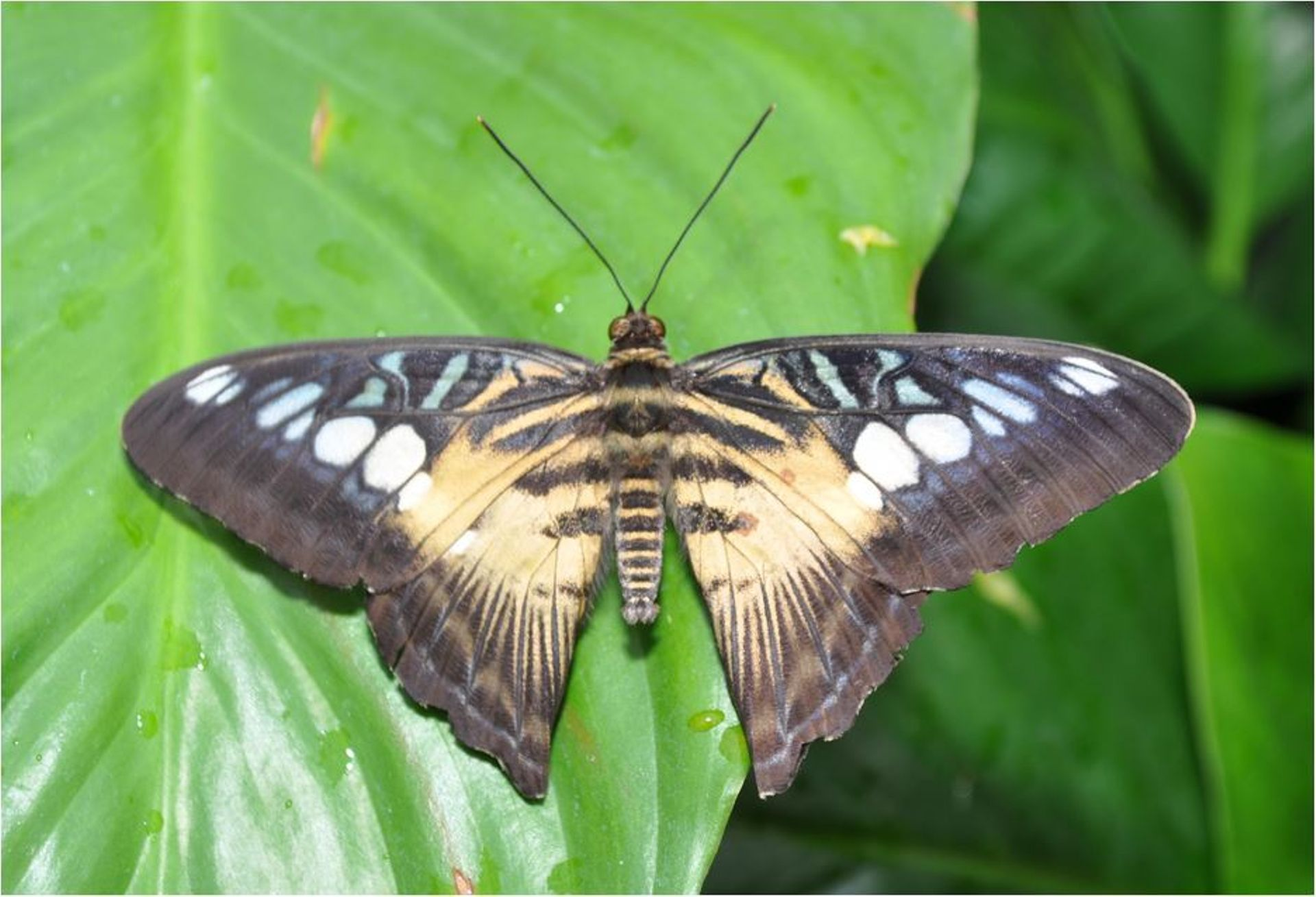site de rencontre papillon)