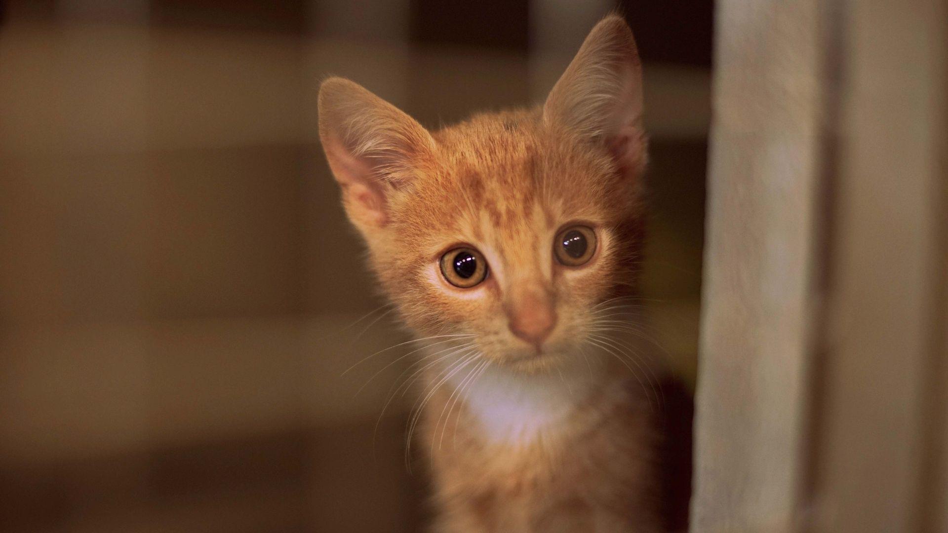 chat arabe sans inscription)