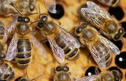 La fête du miel, c'est ce dimanche à Virelles !