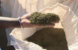 Stromae témoigne sur le traitement anti-paludisme qui l'a rendu malade