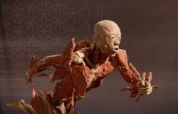 Cette exposition saisissante dissèque l'humain en présentant 14 véritables corps
