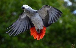 La Gabon, leader de la biodiversité ?