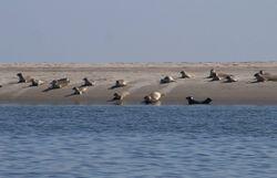 Des phoques sauvés grâce au Zeehondcentrum Pieterburen