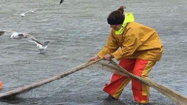 Une deuxième femme pêche à dos de cheval à Oostduinkerke: pourquoi c'est révolutionnaire