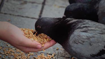 """Chantal : """" Les pigeons, c'est dégueulasse ! 1 mois de suspension de la pension si on les nourrit """""""