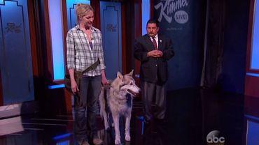 """Voici """"le loup de Sotchi"""", un animal apprivoisé qui a servi au canular de Jimmy Kimmel, sur ABC"""