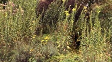 Des plantes typiques des terrains vagues grimpent à deux mètres devant la maison.