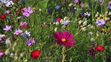 Concours de jardins: Jardiner pour la biodiversité