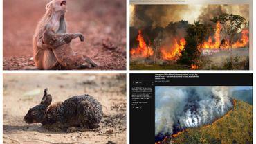 Ces photos n'ont pas été prises en Amazonie, ou alors il y a plusieurs années