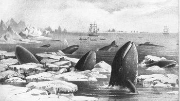 Le Blue Whale Challenge : le désespoir des baleines