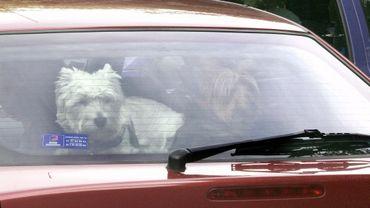 Plus de 30° attendus lundi : attention aux enfants et aux animaux dans les voitures surchauffées...