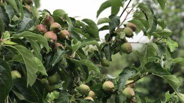 2018 sera un bon cru pour les producteurs de pommes et de poires.