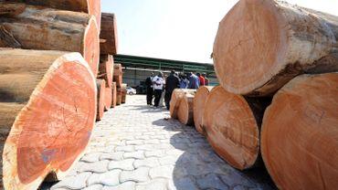 Anvers, plaque tournante du commerce illégal de bois?