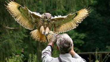 Chouettes, hiboux, buses, faucons, vautours, aigles...