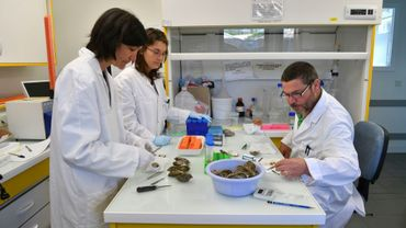 Isabelle Arzul (g), spécialiste en parasitologie à l'Ifremer, étudie avec son équipe la surmortalité des huîtres au laboratoire de Ronce-les-Bains, le 13 avril 2017 en Charente-Maritime