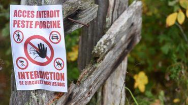 """Peste porcine: création d'une """"zone blanche"""" vide de sangliers à la frontière belge"""