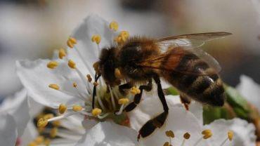 Une apiculteur d'Esneux au parlement européen pour défendre les abeilles