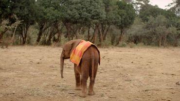 La merveilleuse histoire de l'éléphanteau Ndotto refait surface sur Twitter (vidéo)