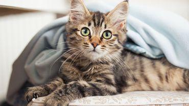 Stérilisation et enregistrement des chats : du neuf dès ce 1er novembre