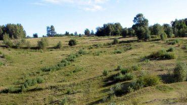 La réserve est reconnue pour son très grand intérêt biologique et paysager, dont une lande de bruyère