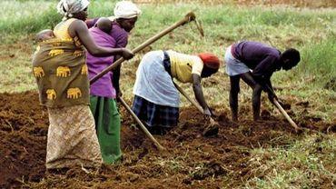 Agriculteurs au Rwanda