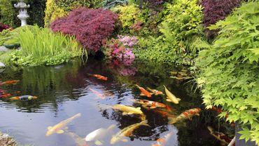 Point D Eau Jardin avoir un point d'eau dans son jardin : ce qu'il faut savoir
