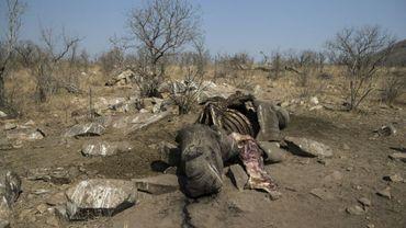 La carcasse d'un rhinocéros blanc abattu par des braconniers dans le parc national Kruger, en Afrique du Sud, le 21 août 2018.
