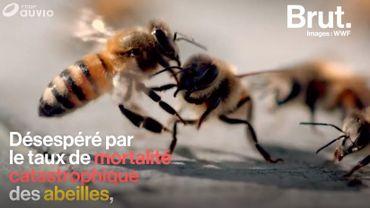 France: à Paris, les apiculteurs se mobilisent pour sauver leurs abeilles