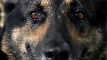 Sombra, un chien renifleur de drogues à l'aéroport El Dorado International de Bogota le 27 juillet 2018