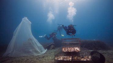 Cette cage faite de grillages et de coquilles d'huîtres sert pendant quelques jours de nursery à des poissons réacclimatés à leur milieu naturel.