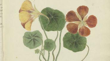 Un manuscrit de botanique de la flore cubaine du 19e siècle numérisé