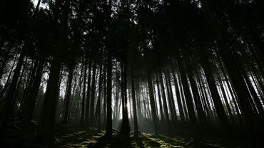 """Les responsables du projet """"Feel Wood"""" comptent sensibiliser les propriétaires à l'importance du reboisement, de la gestion durable des parcelles."""