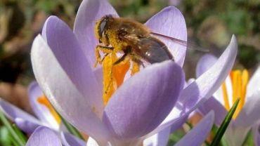 Ouftivi : Le secret des abeilles